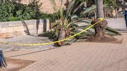 Fallece una mujer tras caerle una palmera por el fuerte viento en