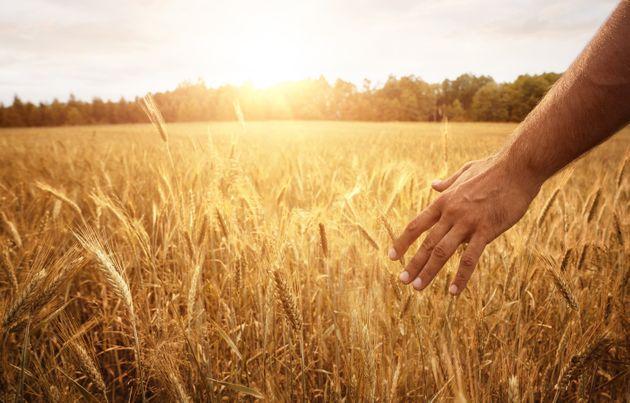 El día que la agricultura condenó a la
