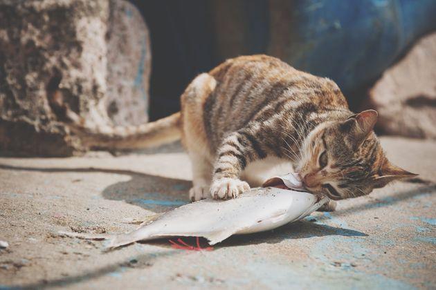 Descubras as comidas que os gatos NÃO podem comer de jeito