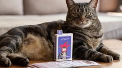 'Cansei de ser gato' lança baralho personalizado com ilustrações do
