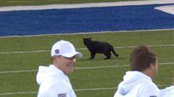 Η μαύρη γάτα που έφερε γρουσουζιά στους New York