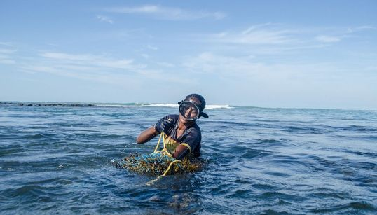Tamil Nadu's Seaweed Harvesters In Rough