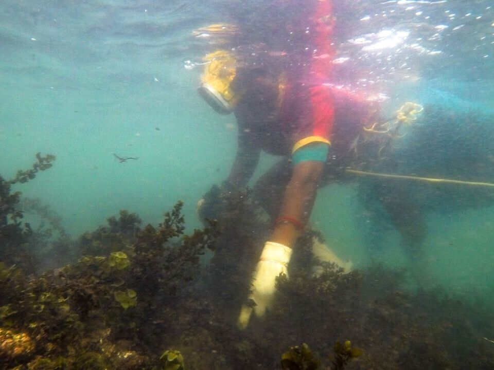 Seaweed harvesting is a traditional occupation passed on from mother to daughter in this region; here,...