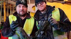 600 bouteilles de cognac retrouvées en mer