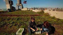 Städtische Betriebe Sollen Eine Lösung Für Unsere Nahrung Leiden. Die Realität Ist Nicht So Einfach.