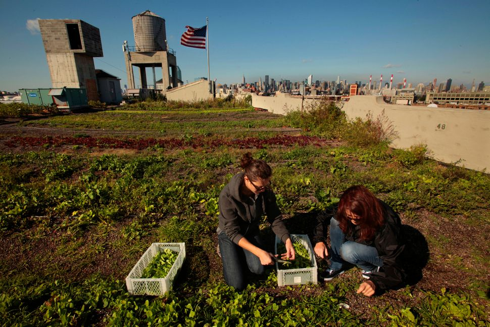 The Brooklyn Grange has a 40,000-square-foot commercial rooftop garden in the New York City borough of Queens.