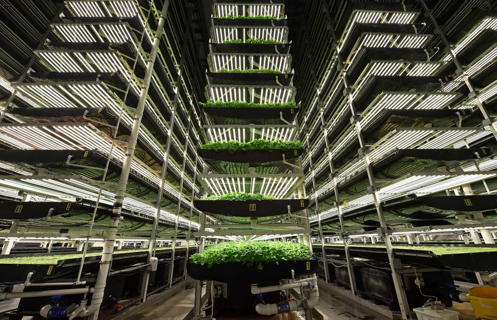 Vertical grow towers at AeroFarms in Newark, New Jersey.