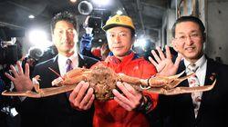 Ιαπωνία: Καβούρι του χιονιού πωλήθηκε για το ποσό ρεκόρ των 5 εκατ.