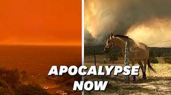 En Australie ravagée par les feux, le ciel et l'océan sont devenus