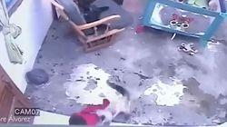 Γάτα - υπερήρωας σώζει τη ζωή βρέφους προτού κατρακυλήσει από