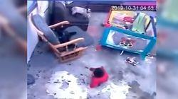 Un gato salva a un bebé de caer por las
