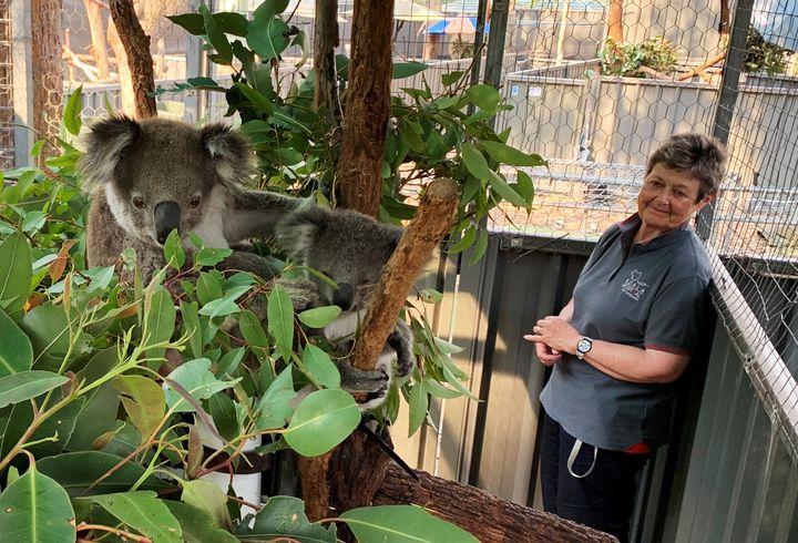 Sue Ashton, president of Koala Conservation Australia, looks at a koala mother named Julie and an unnamed koala joey in Port Macquarie.