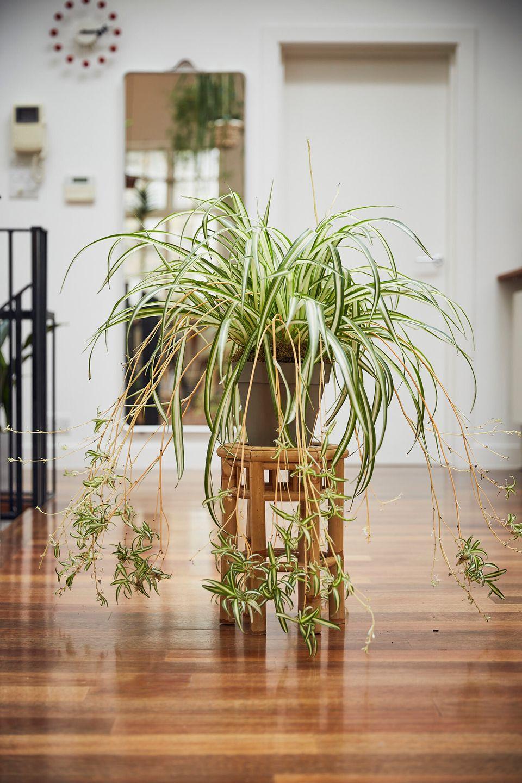 Πώς να καθαρίσετε τον αέρα του σπιτιού σας με φυτά εσωτερικού