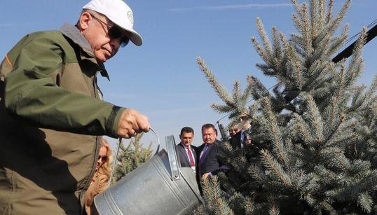 Η Τουρκία φυτεύει 11 εκατομμύρια δέντρα για ένα πιο πράσινο