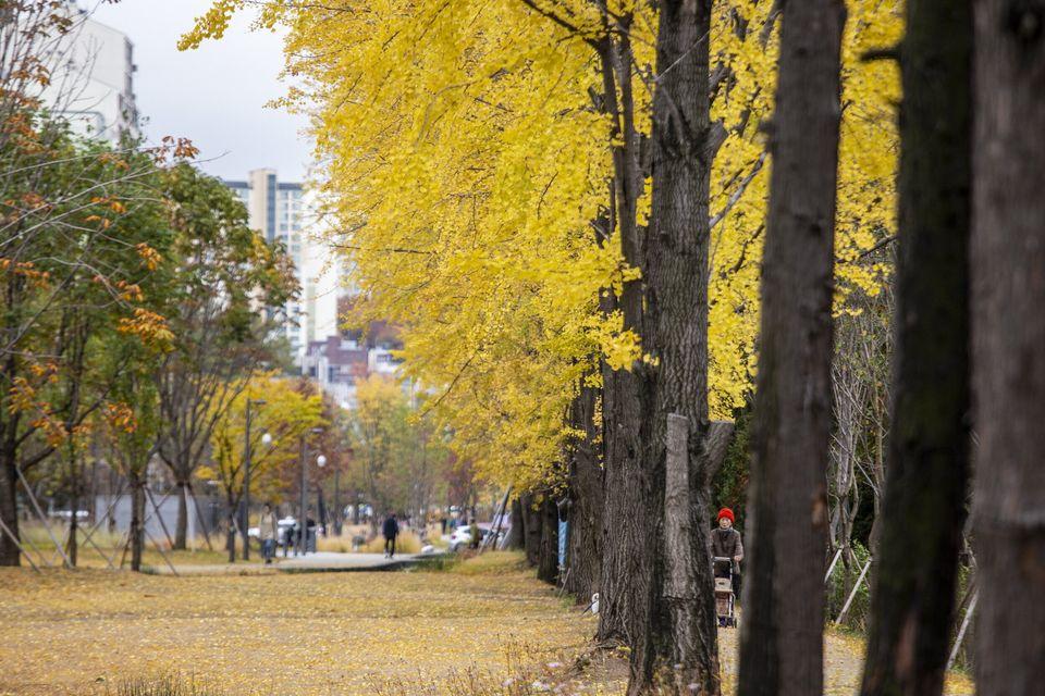은행나무 숲길이 인상적인 경의선