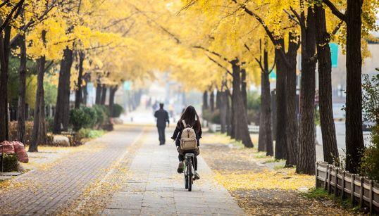 가을 다 가기 전에 가보자, 서울 속 숨은 단풍 명소