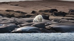 Η αόρατη απειλή της κλιματικής αλλαγής: Θανατηφόρος ιός σκοτώνει την θαλάσσια