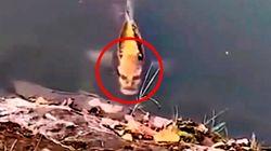 El pez con cara humana que se ha vuelto