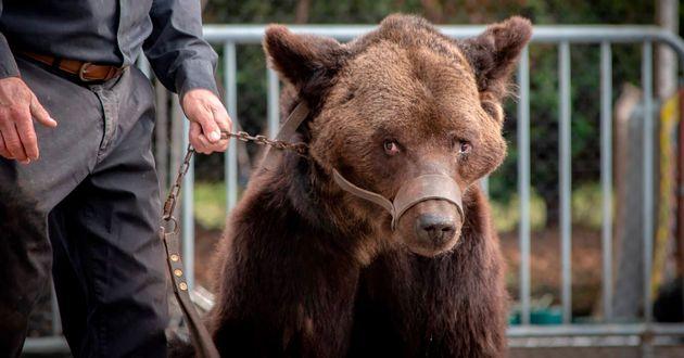 L'ours Mischa le 13