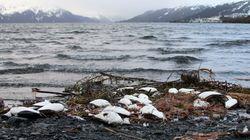 Ινδία: Χιλιάδες πουλιά βρέθηκαν νεκρά σε λίμνη και κανείς δεν ξέρει