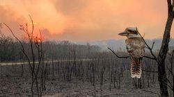 Confrontés aux feux de brousse, les Australiens partagent cette photo d'un oiseau