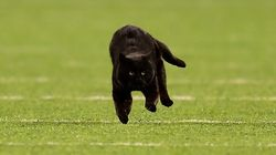 アメフトの試合に乱入した黒猫、タッチダウンを決める⇒スタメンに起用されてしまう(動画)