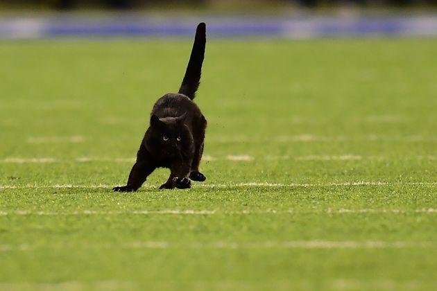 乱入した黒猫