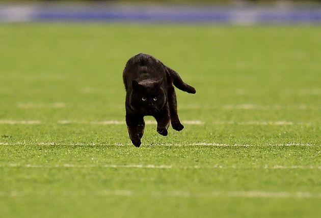 試合に乱入した黒猫