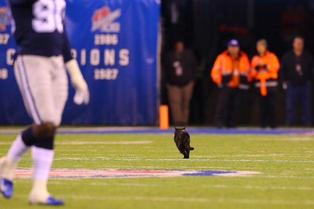 試合に乱入し、スタメンに起用された黒猫(動画・写真)