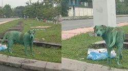 말레이시아에서 '녹색 개'가 나타나 사람들이 공분하고 있다 (사진