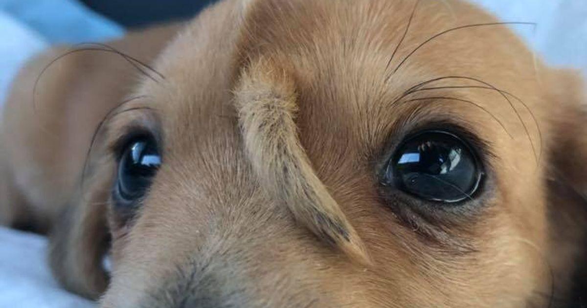 額にシッポが生えている子犬が、大人気に。「違うって素晴らしいことなんだ」