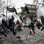 À Paris, les pigeons perdent leurs pattes à cause des coiffeurs (entre