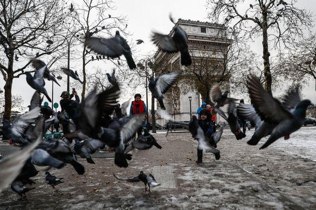 À Paris, les pigeons perdent leurs pattes à cause des coiffeurs (entre autres)