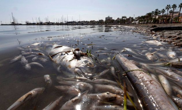 Peces muertos en el Mar