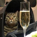 重すぎて客室内への持ち込みを断られた猫を、飼い主がこっそり客室へ。驚きの手段とバレた理由とは?
