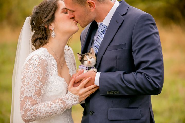 Chloe the calico was the best wedding surprise.