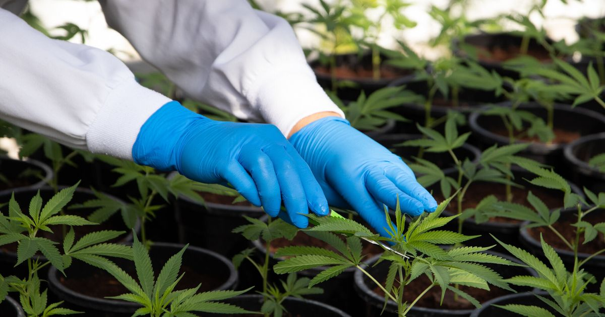 Why Are Doctors Still So Reluctant To Prescribe Medical Cannabis?