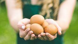 Le grand impact du petit œuf