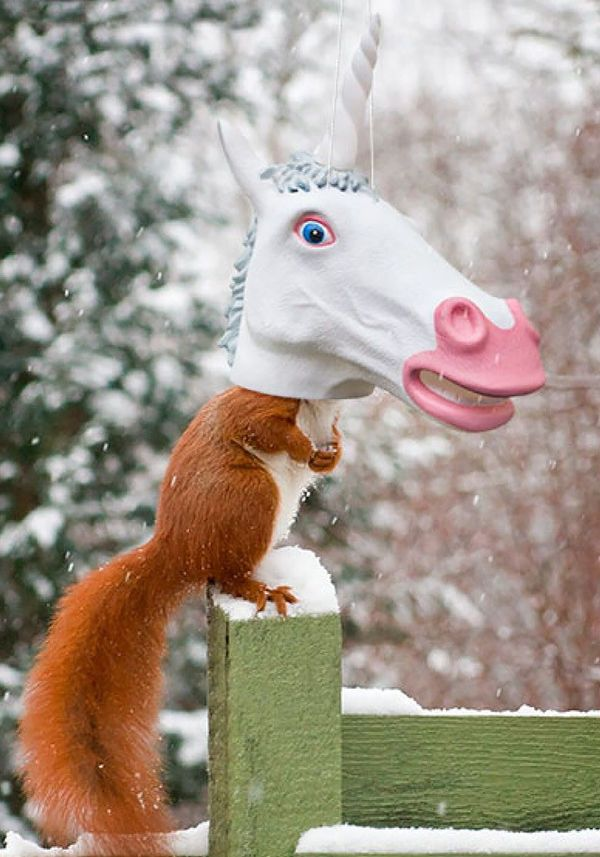 "Squirrels get hungry and people get bored. This <a href=""https://www.fun.com/unicorn-squirrel-feeder.html"" target=""_blank"">un"