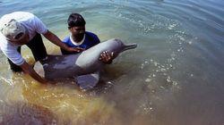 絶滅危惧のイルカをKDDIの研究員が調査。海中ケーブルの技術が意外な場所で役に立っていた。