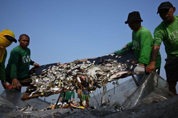 <i>Les Philippines sont d&eacute;j&agrave; confront&eacute;es &agrave; un probl&egrave;me ing&eacute;rable de d&eacute;chets et de pollution. Ici, des ouvriers ramassent des milliers de poissons morts dans la baie de Manille, l&rsquo;une des voies navigables les plus pollu&eacute;es du pays.</i>