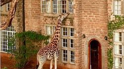 자연을 실내로 끌어들인 전 세계 호텔