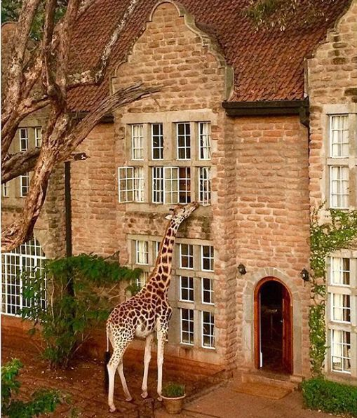 케냐 나이로비의 호텔