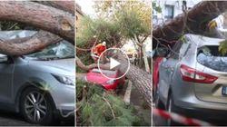 Maltempo a Roma. Grosso albero cade su due auto in sosta