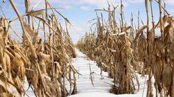 Neige hâtive: les producteurs de grains sollicitent le