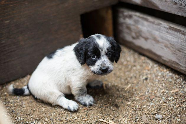 L'abandon des animaux fera l'objet d'une mission parlementaire (photo
