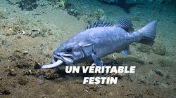Ce que vous voyez dans la gueule de ce poisson est un