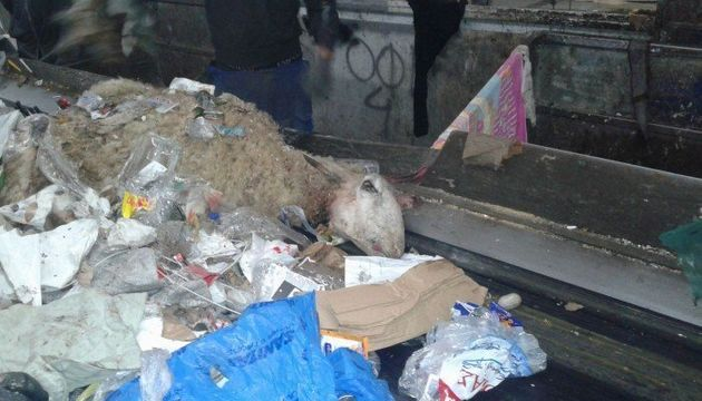 ΚΔΑΥ Ηρακλείου: Ενα εργοστάσιο τρόμου με νεκρά έμβρυα, κουφάρια ζώων και