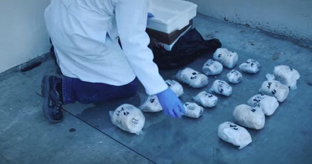 Ce ne sont pas des ballots de drogue, mais des vessies natatoire de totoaba, la