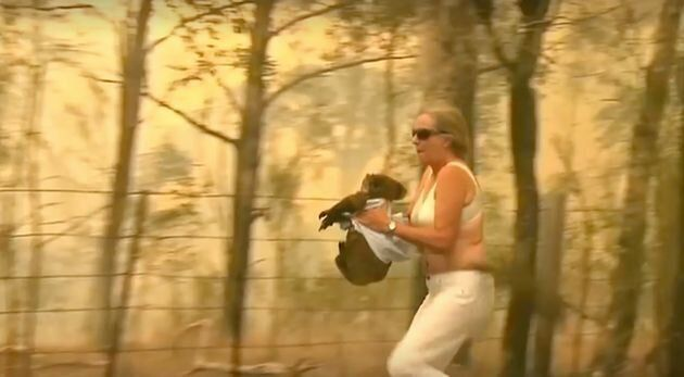 コアラに駆け寄り、自分のシャツで包んで救う女性